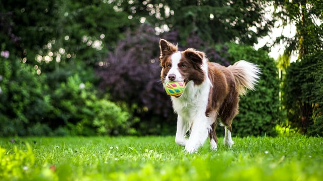 How to Look Out for Dog Allergies & Skin Sensitivities